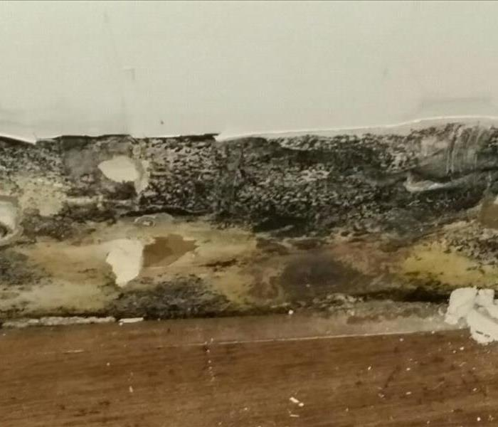 Mold Cleanup in Menlo Park Home Before