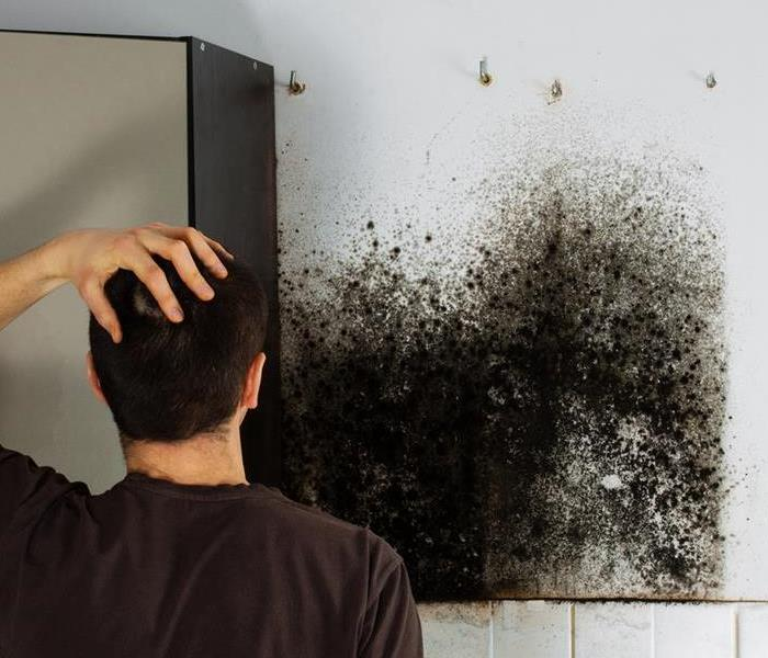 Mold Remediation Mold Remediation in Palo Alto